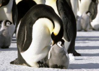 pingviinien matka4